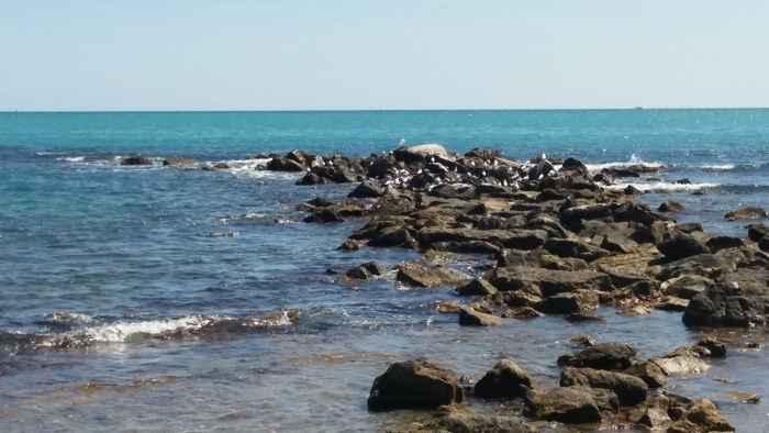 Gaviotas en las rocas
