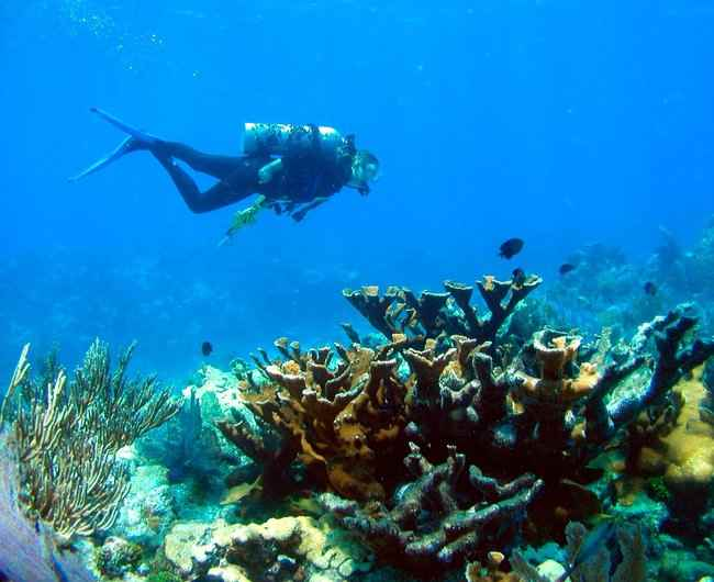 corales-de-florida