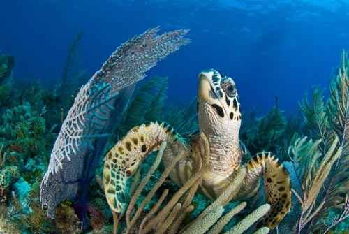 Jardines de coral de cuba hablame del mar for Como llegar a jardines de la reina cuba