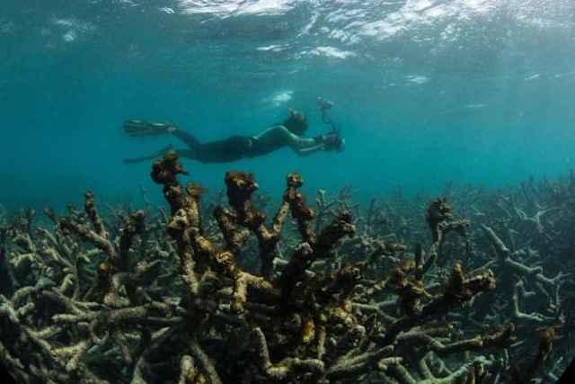 Resultado de imagen para zonas muertas océanos